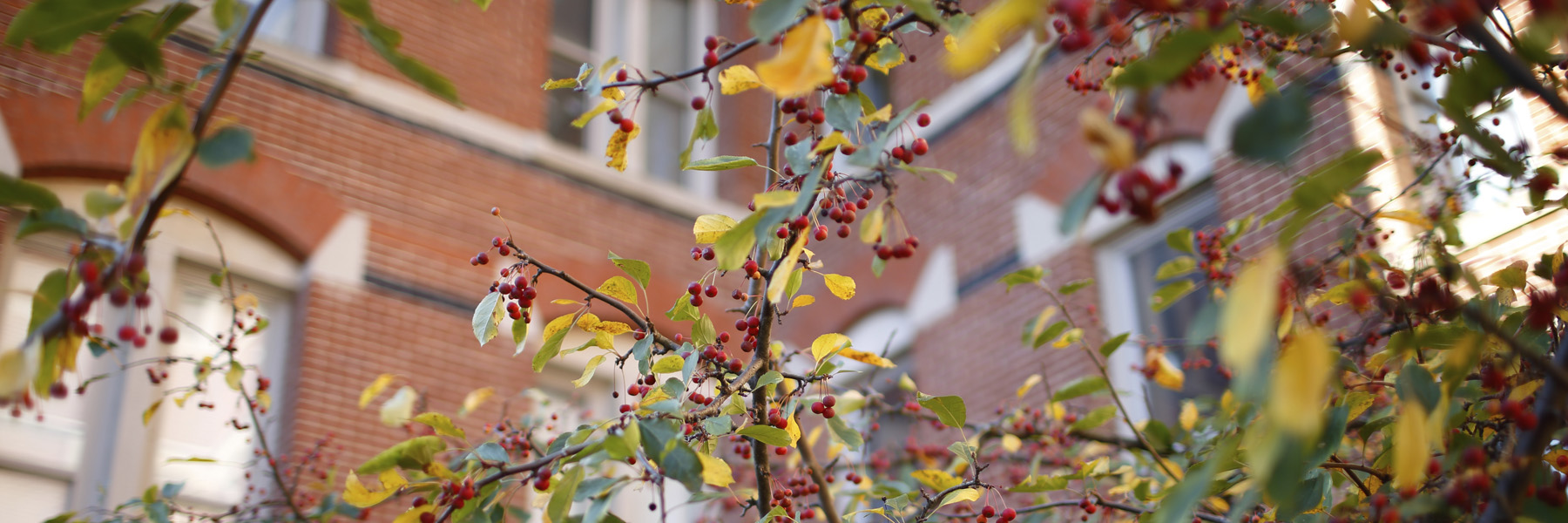 Berries outside one of the buildings on IU campus.